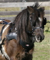 PONY SPORTZ Harness by Zilco