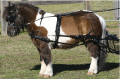 SL Mini, Shetland Pony and Small Pony Harness from Zilco
