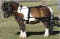 SL Mini, Shetland Pony and Small Pony Harness from Zilco