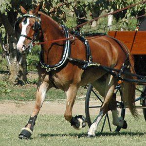 Hunt's Pony size Show Harness