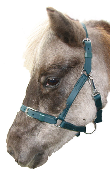 "Beta Biothane 3/4"" Buckle Nose Halter"