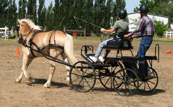 The RED HAWK Single PONY Multi-Purpose Carriage