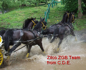 "ZILCO ""ZGB"" Single Harness Black Cob size"
