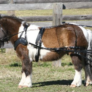 SL SPORTZ Small Pony Harness from Zilco