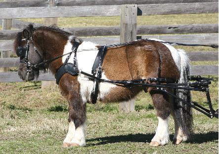 SL SPORTZ Small Pony Harness from Zilco