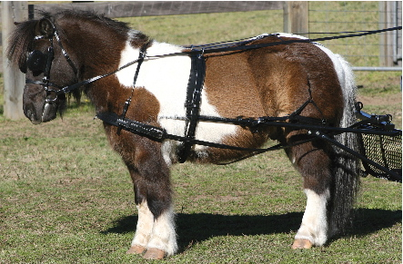 SL Shetland Pony PAIR Harness by Zilco